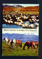 ICELAND  -  Sheep And Ponies  Dual View  Unused Postcard - Islande