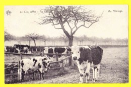 * De Haan Aan Zee - Coq Sur Mer (kust - Littoral) * (Héliotypie De Graeve - Star, Nr 2405) Au Paturage, Vache, Cow, Koe - De Haan