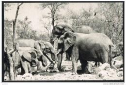 NAMIBIA - South West Africa - Elephants Elephant - Used STAMP Windhoek ( 2 Scans) - Namibie