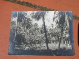 Cpsm 10x15 V Guyane Francaise Iles Du Salut Ed Robbez Masson La Foret Vierge Bon Etat - Guyane
