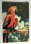 Publicité BIDENDUM Perroquet Typique Des îles Vierges - Vierges (Iles), Britann.