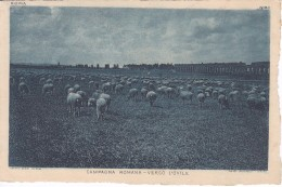 POSTAL DE CAMPAGNA ROMANA - VERSO L'OVEILE - REBAÑO OVEJAS (OVEJA-SHEEP) GANADERIA - Animali