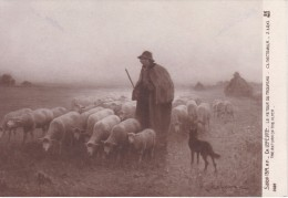 POSTAL DE UN PASTOR CON SU REBAÑO OVEJAS (OVEJA-SHEEP) GANADERIA - Animali