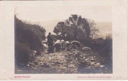 POSTAL DE EL MONTSENY DE UN PASTOR CON SU REBAÑO OVEJAS CAMINO AL COLLADO DE SANTA ELENA (OVEJA-SHEEP) GANADERIA - Animaux & Faune