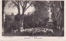 POSTAL DE LA CARTUJA DE MIRAFLORES ENTRADA PRINCIPAL - REBAÑO DE OVEJAS (OVEJA-SHEEP) GANADERIA - Animales
