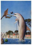 ANIMAIS - DOLPHINS - Les Dauphins Du Marineland  Carte Postale - Dauphins