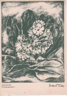 AK Echte Aurikel - Serie Original-Kreidezeichnungen - Ca. 1930/40 (23448) - Blumen