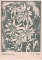 AK Edelweiß - Serie Original-Kreidezeichnungen - Ca. 1930/40 (23450) - Blumen