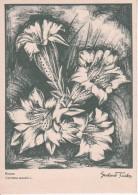 AK Enzian - Serie Original-Kreidezeichnungen - Ca. 1930/40 (23451) - Blumen