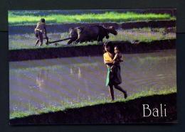 INDONESIA  -  Bali  Rice Paddy  Unused Postcard - Indonesia