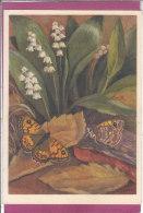 Nymphalidae : Pararge Megera H. - Schmetterlinge