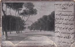 Asie -- Liban -- Beyrouth -- Promenade Des Pins - Liban