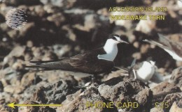 Ascension - Wideawake Tern - 3CASD - Ascension