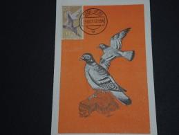 ESPAGNE / IFNI - Carte Maximum Pigeons 1957 - A Voir - L 156 - Ifni