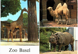 Suisse - Basel Zoo - Bale - Girafe - Chameau - Rhinocéros - BS Bâle-Ville