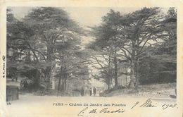 Paris - Cèdres Du Jardin Des Plantes - Carte Précurseur B.F. Paris - Arbres