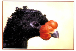 Thème - Oiseaux - Hocco Carongulé (jardin D'oiseaux Tropicaux La Londe Les Maures) - Uccelli