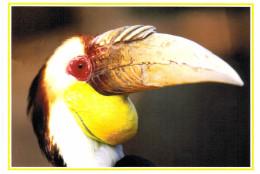 Thème - Oiseaux - Calao à Bec Ondulé (jardin D´oiseaux Tropicaux La Londe Les Maures) - Uccelli