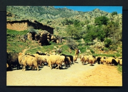 MOROCCO  -  Azilal Region  Unused Postcard - Morocco