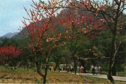 Korea, North - Onjong Ri In Spring - Corée Du Nord