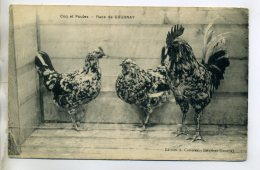 76 GOURNAY En BRAY Agriculture Elevage Coq Et Poules Race De Gournay écrite 1914    /D12-2016 - Gournay-en-Bray
