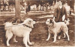 CHIENS Des PYRENEES -  CA VA BARDER - EDIT Labouche - ENCH0616 - - Hunde