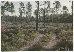 Skogen- En Förnybar Resurs   Finland / Suomi - Finland