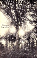 BONSECOURS / LE GROS PEUPLIER - Belgique