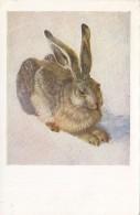 Albrecht Durer - Junger Hasse , Rabbit 1954 - Pittura & Quadri