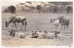 EAST AFRICAN GAME - WILDERBEESTE - Autres