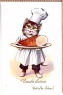 Humanized Dressed Cat Cook. Photo Postcard.Latvian Edition. - Katten