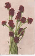 CPA Blumenstrauß - 1909 (23589) - Blumen