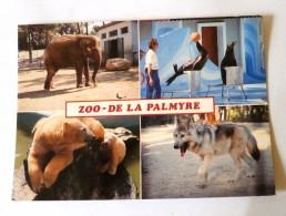 ZOO DE LA PALMYRE MULTIVUES - ELEPHANT OTARIES OURSE ET OURSON LOUP - France