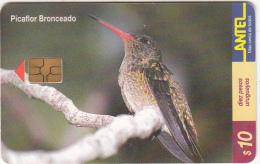URUGUAY - Bird, Picaflor Bronceado(127a), 08/00, Used - Uruguay