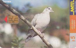 URUGUAY - Bird, Torcaza(124a), 06/00, Used - Uruguay