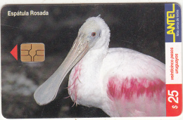 URUGUAY - Bird, Espatula Rosada(122a), 06/00, Used - Uruguay