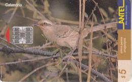 URUGUAY - Bird, Calandria(103a), 03/00, Used - Uruguay