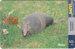 URUGUAY - Animal, Mulita(92a), 11/99, Used - Uruguay