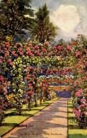 MISCELLANEOUS ART - ROB HUGHES - KEW GARDENS - THE ROSE PERGOLA  Art349 - London