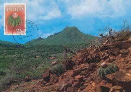 D24071 CARTE MAXIMUM CARD 1994 NETHERLANDS ANTILLES - MELOCACTUS AT CURAÇAO CP ORIGINAL - Sukkulenten