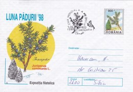ROUMANIE  ENTIER POSTAL THEME ARBRES ET FORET - Trees