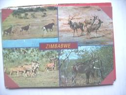 Africa Zimbabwe Animals - Zimbabwe