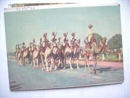 India Camel Ride - India