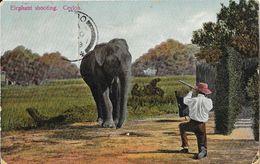 Ceylon - Elephant Shooting - F. Skeen & Co. - Sri Lanka (Ceylon)