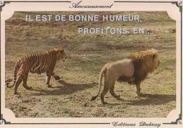 Lion   H3H     Lion Et Tigre. Il Est De Bonne Humeur, Profitons En... - Lions