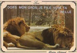 Lion   H4H     Dors Mon Gros, Je File Voir Ta Belle - Lions