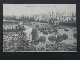 Ref5304 NIK CPA Animée De Arcachon - La Récolte Des Huitres - CB N°40 - Phototypie Ch. Chambon - Arcachon