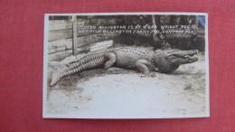 RPPC   Jumbo Alligator  Ostrich Alligator Farm Latana  Florida>  Ref 2266 - Animals