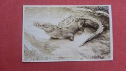 Zulu Crocodile    Lantana Fl  Ref 2266 - Animals