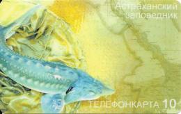 Prepaid: Störfisch. Mint - Rusia